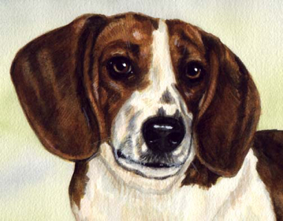 Beagle Dog Pet Watercolor Portrait Carol Wells