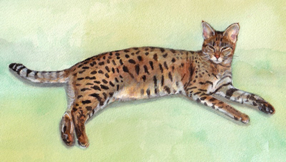 Bengal Cat Watercolor Carol Wells