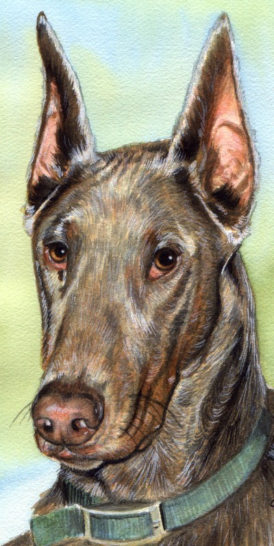 Great Dane Dog Watercolor Pet Portrait Carol Wells