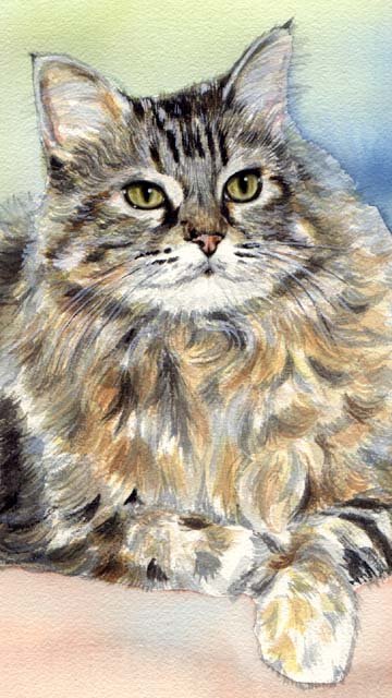 Longhaired Tabby Cat Watercolor Carol Wells