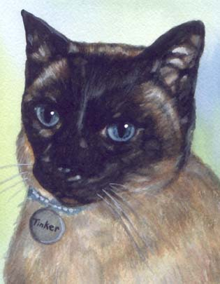 Siamese Cat Watercolor Carol Wells