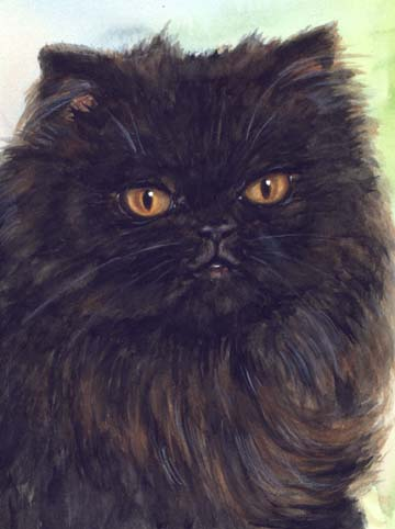 Black Persian Cat Watercolor Carol Wells