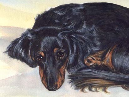 Longhaired Dachshund Watercolor Pet Portrait Carol Wells