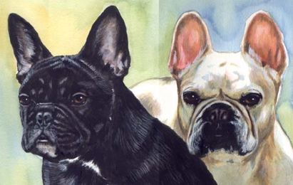 French Bulldogs Watercolor Pet Portrait Carol Wells