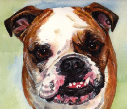 English Bulldog Watercolor Carol Wells