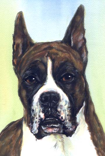 Boxer Dog Watercolor Portrait Carol Wells