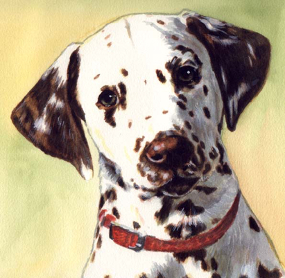 Dalmatian Liver Spots Dog Watercolor Pet Portrait Carol Wells