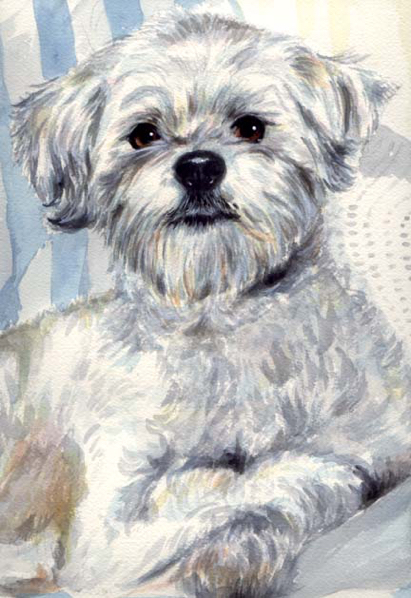 White Dog Watercolor Pet Portrait Carol Wells