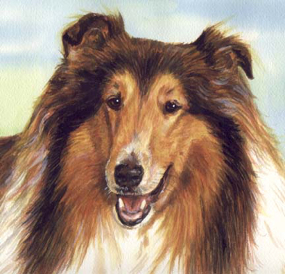 Collie Dog Watercolor Pet Portrait Carol Wells